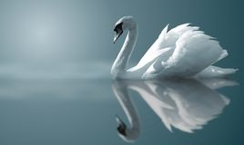 Swan Reflections Royalty Free Stock Photos