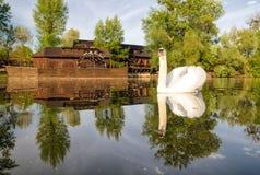 Swan on river Danube and watermill in Kolarovo, Slovakia Stock Photo