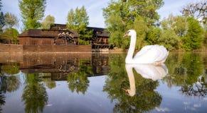 Swan on river Danube and watermill in Kolarovo, Slovakia Royalty Free Stock Photos