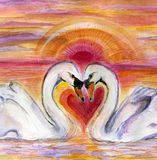Swan Romance Stock Photo