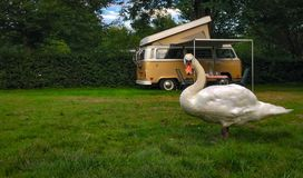 Swan and RV bus royalty free stock photo
