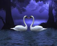 Swan Scene at Evening. Digital render of two swans on a wooded lake at evening, making a heart shape between the necks vector illustration