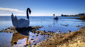 Swan sculptures on lake Royalty Free Stock Image