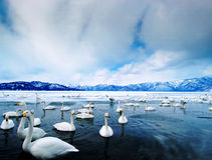 Swan See Lizenzfreie Stockfotografie