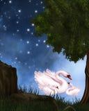 Swan See