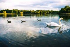 Swan See Stockfoto