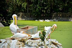 Swan See Lizenzfreie Stockbilder
