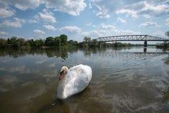 Swan See Lizenzfreie Stockfotos