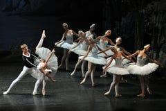 Swan See-Ballett Stockbild