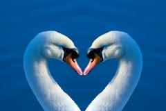 swan serca obraz stock