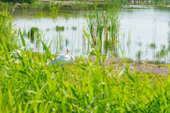 Swan on the shore of a lake in sunlight Stock Images