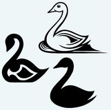 Swan sign Stock Images