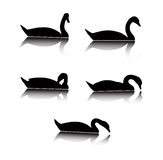 Swan silhouettes Stock Photography