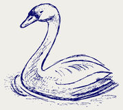 Swan sketch Royalty Free Stock Image