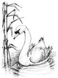 Swan sketch Royalty Free Stock Photo