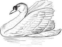 Swan sketch on white background Stock Photos