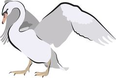 Swan spreading wings for a courtship dance vector illustration