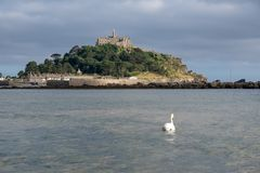 Swan at St. Michael's Mount Royalty Free Stock Photo