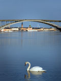 Swan in Stockholm Stock Images