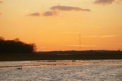 Swan at sunset royalty free stock photos
