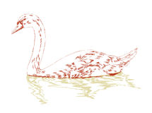Swan on surface hand sketch Stock Photo