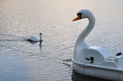 Swan with swan. Swan shaped pedal boat meeting with real life swan Royalty Free Stock Photography