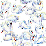 Swan. Swan Watercolor drawing. Swan flock seamless pattern. Royalty Free Stock Image