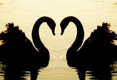 Swan swimming Stock Photo