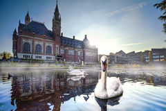 Swan swimming in Autumn mist stock image