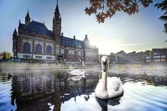 Swan swimming in Autumn mist. Swan swimming and protecting his female again intruders in front the peace palace looking for food, The Hague, Netherlands royalty free stock images