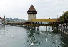 Swan Swims Towards Kapellbrücke or Chapel Bridge. Famous wooden bridge in Lucerne Switzerland Stock Images