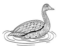 Swan swims on the water coloring vector for adults Royalty Free Stock Images