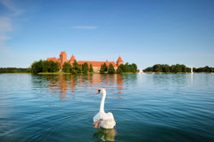 Swan and the Trakai castle in a background Royalty Free Stock Images
