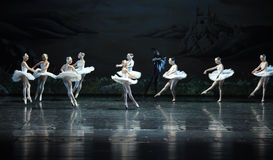 Swan tribe-ballet Swan Lake Royalty Free Stock Image