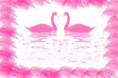 swan två Royaltyfria Bilder