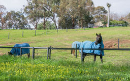 Swan Valley Horse Pasture Stock Images