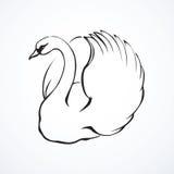 Swan. Vector drawing Stock Photos