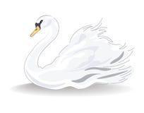 Swan Vector  Stock Photo