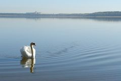 Swan on water Royalty Free Stock Images