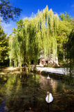 Swan willow Stock Images