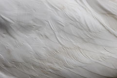 Swan wing detail Royalty Free Stock Photos