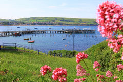 Swanage bay and pier with lots of boats in the water Stock Photography