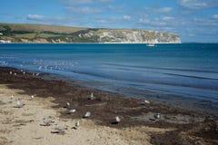 Swanage molo Dorset UK Zdjęcie Royalty Free