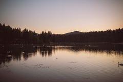 Swanlake Στοκ Φωτογραφίες
