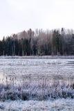 Swanlake Στοκ φωτογραφία με δικαίωμα ελεύθερης χρήσης
