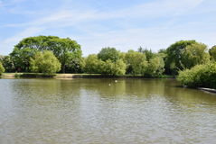 Swanley park and Lake Royalty Free Stock Photos