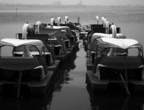 Swans. Swan Paddle boats in Vietnam's Capital, Hanoi Royalty Free Stock Image