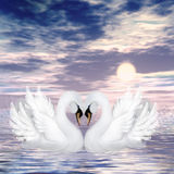 Swans. Illustration of cute swans in love Stock Images