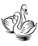Swans. Illustration Stock Photography