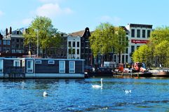 Swans in Amsterdam, Netherlands, Europe stock photography